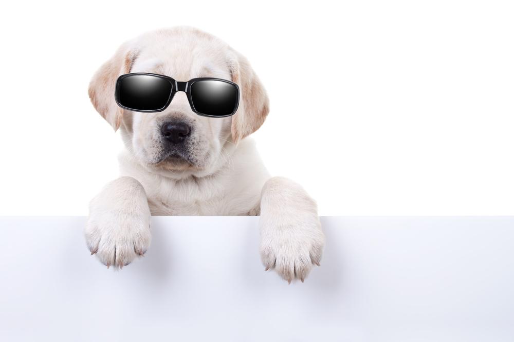Hundar i populärkulturen