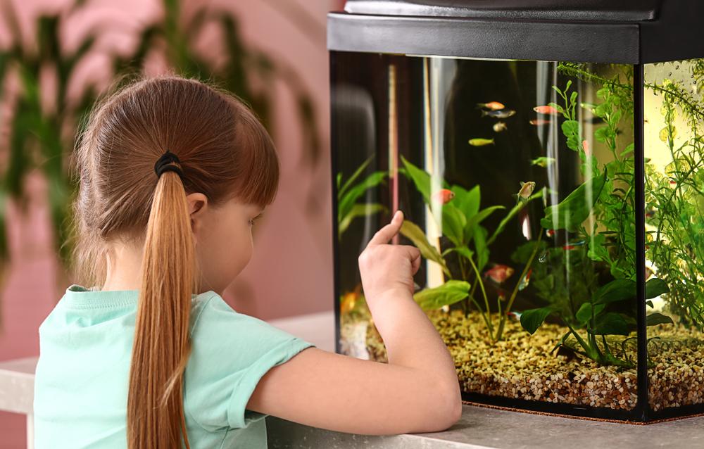 Att köpa ett akvarium
