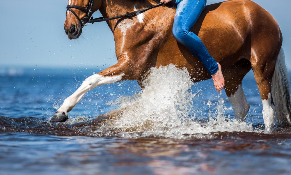 För dig som har egen häst